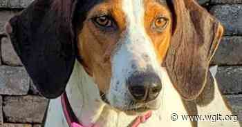 Animal Shelters Grapple With Surge In Surrendered Animals - WGLT