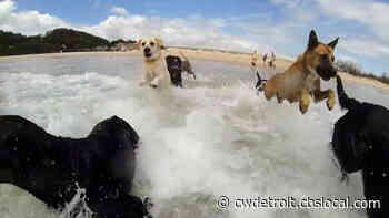 World's Funniest Animals: Summer Fling - CBS Pittsburgh