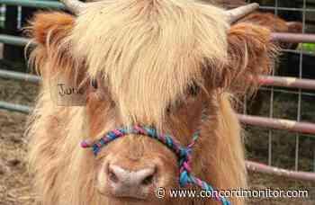 Carole's Corner: Animals make us feel better - Concord Monitor