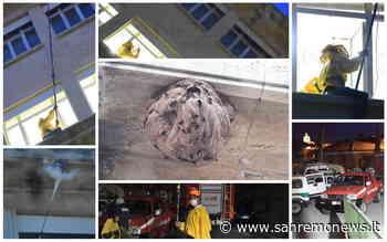 Sanremo: un nido di vespe velutine sotto un cornicione dell'ospedale 'Borea', le immagini della rimozione (Foto) - SanremoNews.it