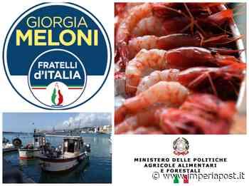 """Stop Ministero a pesca gambero rosso Sanremo: Fratelli d'Italia insorge. """"Decisione inaccettabile"""" - Imperiapost.it"""