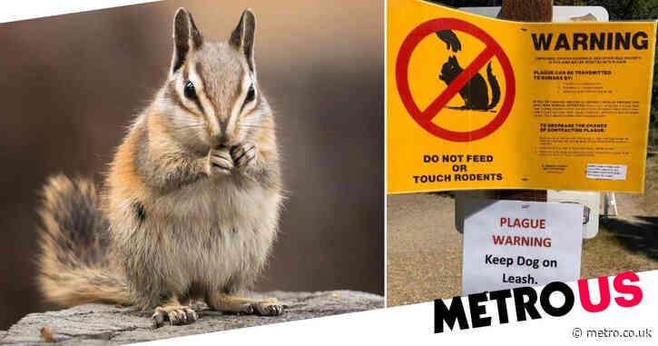 Shore on lake shut down after chipmunks test positive for plague