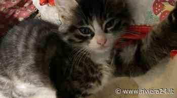Sanremo, gattino cerca casa: qualcuno vuole adottarlo? - Riviera24