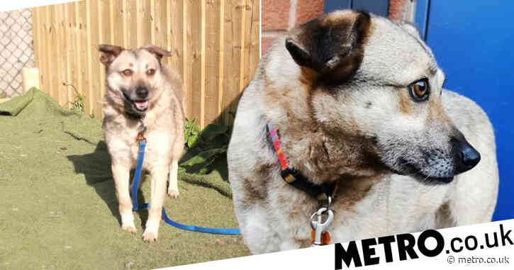 Shy dog who spent her whole life in rescue centres searches for a home