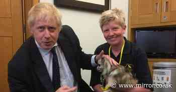 Therapy dog called Harry Potter has climbed Snowdonia and met Boris Johnson