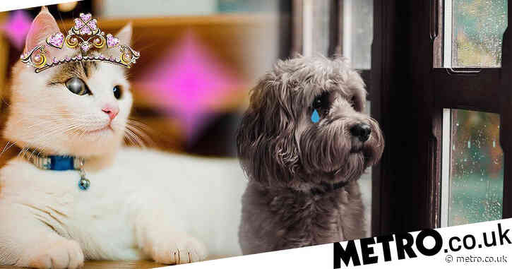 The 'dog days are over' as people are more keen on cats as we come out of lockdown