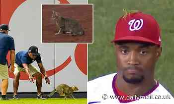 Frightened cat is cheered at Yankee Stadium: Praying 'Mickey Mantis' sits atop Victor Robles's hat