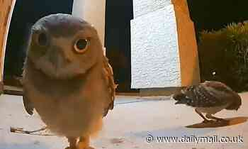 VIDEO: Owl has late night snack on family's porch