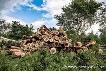 Stad stuurt politie naar bomenkap in privébos in Heffen