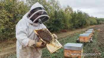 «Entre les gels et les pluies, on n'a pas eu de répit» : en Ile-de-France, une année noire pour les apiculteurs - Le Parisien