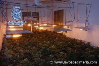 El bloque de la marihuana: desarticuladas tres plantaciones en El Ejido - La Voz de Almería