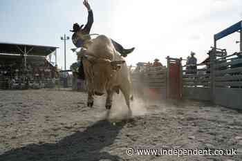 Video shows moment bull charges into audience at rodeo in Idaho