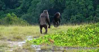 Chimpansees maken gorilla's kopje kleiner - Eos Wetenschap