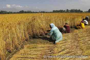 Over 14% of land-owning farmers benefit from MSP purchases: Minister
