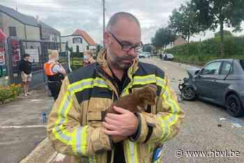 Man ernstig gewond bij zware klap in Riemst, brandweer neemt hondjes mee - Het Belang van Limburg