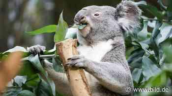 Corona-Zuschuss: Zoo Leipzig bekommt 900 000 Euro vom Freistaat - BILD