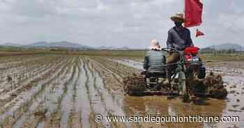 Seúl: Corea del Norte libera reservas de arroz por escasez - San Diego Union-Tribune en Español