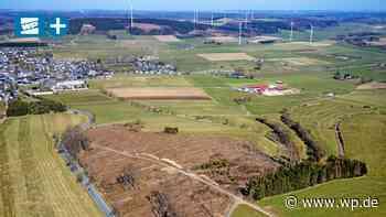 Windpark Brilon: Nimmt Kreis Erschlagung von Vögeln in Kauf? - Westfalenpost