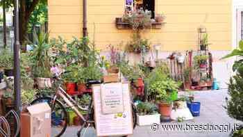 Brescia, il giardino «proibito» in via Marchetti fa sbocciare le polemiche - Brescia Oggi