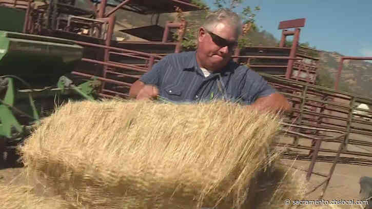 Ranchers Selling Off Cattle In Order To Stay Afloat During Drought