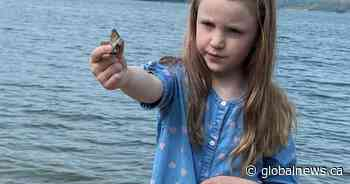 Little girl finds unique fossil at Alberta lake