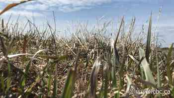 More Alberta communities declare agricultural disaster as drought continues