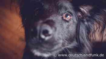 Archäologie - Menschen und Hunde kennen sich schon seit 1,8 Millionen Jahren - Deutschlandfunk