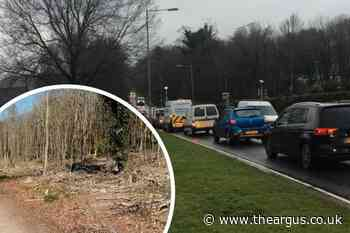Traffic on Coldean Lane to be disrupted as trees cut down