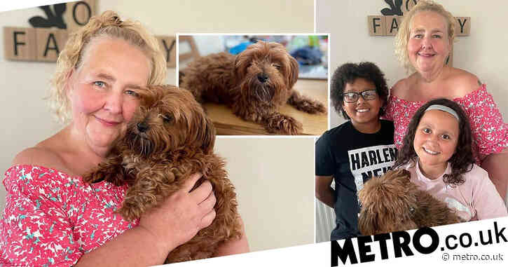 Dog turns up 100 miles from home after bolting from fireworks nine months ago