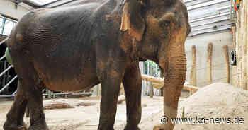 """Zoo Karlsruhe - Sorgen um Elefantendame Nanda: """"Ihr Zustand hat sich deutlich verschlechtert"""" - ka-news.de"""