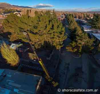 Podan árboles de gran porte en el centro de El Calafate - FM Dimensión - El Calafate