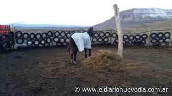 Maltrato Animal en El Calafate: mientras el caballo se recupera esperan decisión del Juzgado - El Diario Nuevo Dia