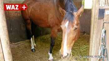 Sechs Pferde aus schlechter Haltung in Hattingen gerettet - Westdeutsche Allgemeine Zeitung