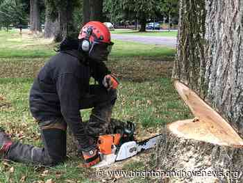 Brighton and Hove News » 50 elm trees felled in Coldean Woods - Brighton and Hove News