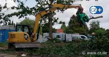 Bau von Sozialwohnungen: Bäume an Wittinger Straße in Celle werden gefällt - Cellesche Zeitung