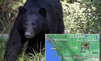 Canadian woman, 26, is mauled to death by black bear in rare attack during logging operation