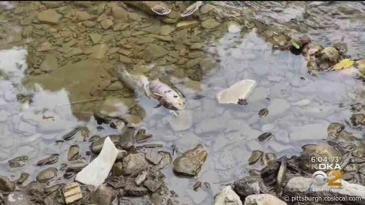 DEP Blames Fungicide For Thousands Of Dead Fish In Chartiers Creek