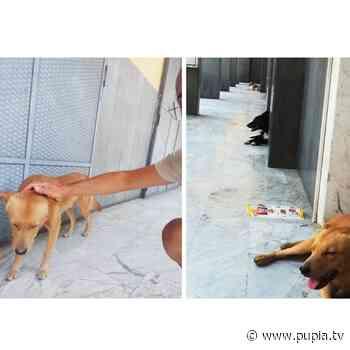 Aversa, un condominio adotta quattro cani randagi - PUPIA