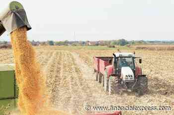 Lower Mandi Arrivals: Small firms active in farm trade on behalf of bigger companies
