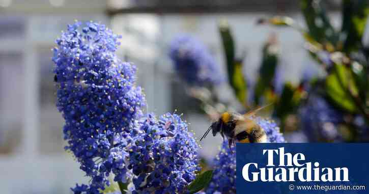 Campaign calls for UK ban on pesticides in gardens and urban areas