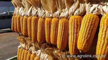 RS: Extensionistas de Passo Fundo participam de qualificação sobre soja e milho - Agrolink