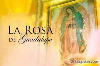 Univision vs Telemundo: 'La Rosa de Guadalupe' vuelve a ser lo más visto del primetime latino - La Opinión