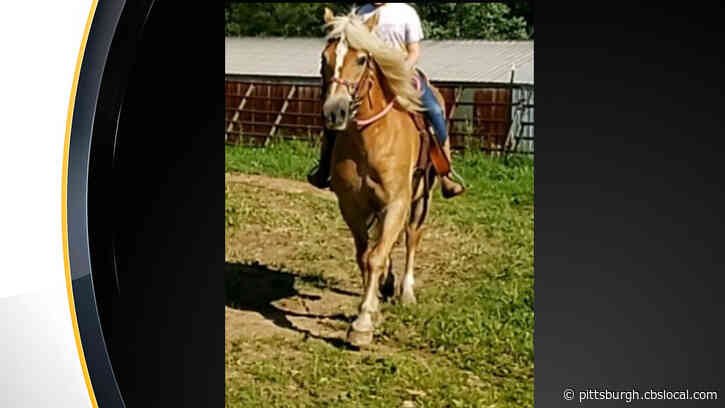 Family Searching For Award-Winning Horse Stolen From Property In Butler County