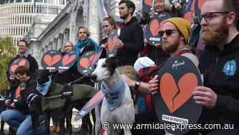 Greyhound deaths put NZ racing on notice - Armidale Express