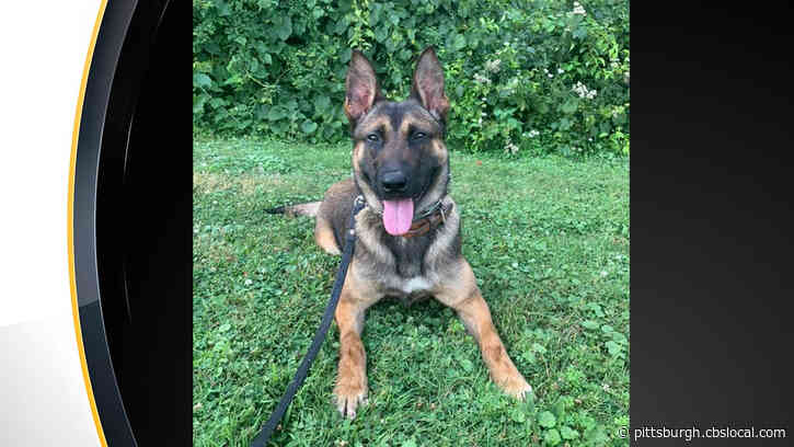 Robinson Township Police Department Welcomes Newest K-9 'Rocky' After 'Sarik' Retires