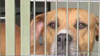 Weather and Shelter Animals: How does weather impact the adoption process? - WRDW-TV
