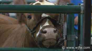 Wisconsin Valley Fair participants prepare their animals for the judges - WJFW-TV