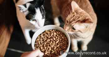 Toxic cat food recall warning after hundreds of pets die from mystery fatal illness - Scottish Daily Record