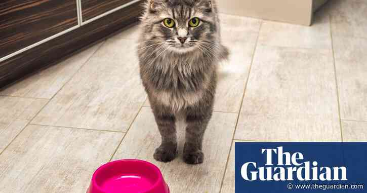 Toxic cat food fear as UK vets struggle with mysterious illness - The Guardian