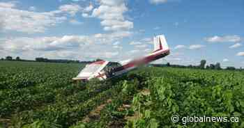 Pilot injury-free after plane crashes into Tillsonburg bean field: OPP - Global News